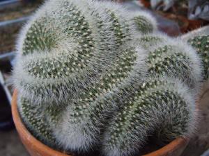 Cactussen jaarkalender: de verzorging van een cactus maand per maand