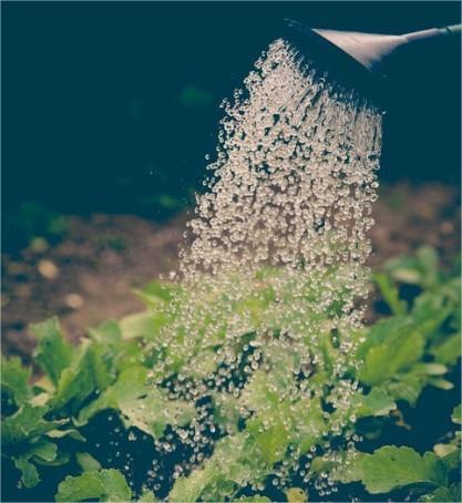 Hoe en wanneer water geven in de tuin?