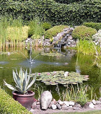 Waterplanten zijn niet alleen mooi, maar ook biologisch zeer nuttig voor het vijverwater.