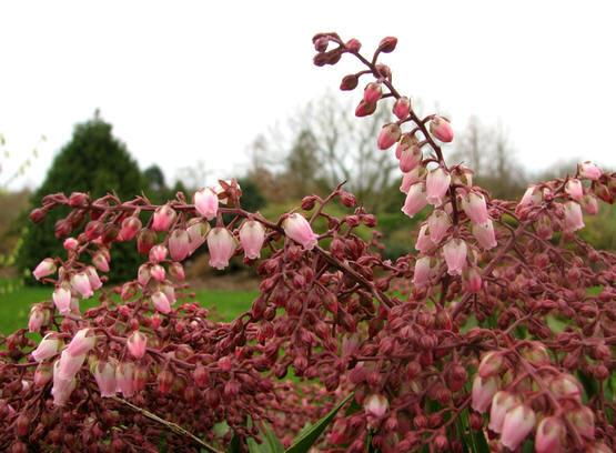 Weerspreuken maart ook guldenmaand, dorremaand, windmaand of lentemaand
