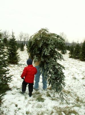Tips bij het kiezen van uw kerstboom