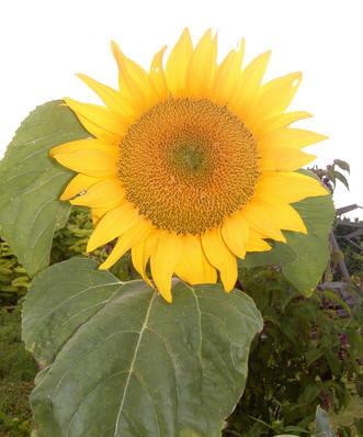 Wil je een heel leven gelukkig zijn, word dan tuinier