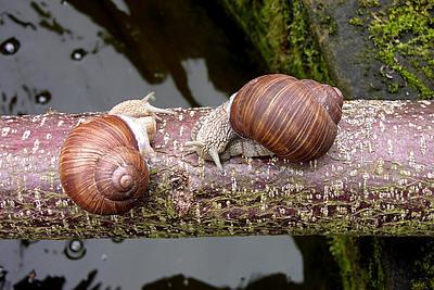 De strijd tegen slakken is een hardnekkige!