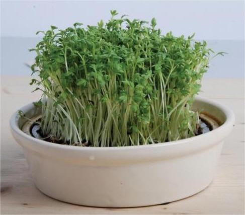 Tuinkers kweken in kweekschaal met gaas + recepten