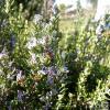 Meest voorkomende kruiden die bloeien in mei