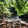 Foto van een dampend bos in de ochtendzon en andere natuurfoto's