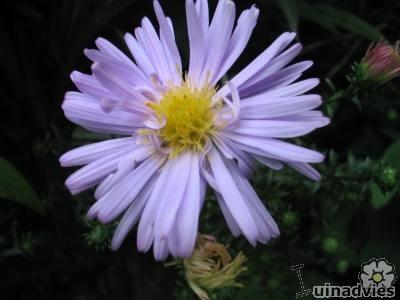 Meest voorkomende planten die bloeien in de maand november