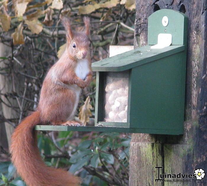 Foto van een eekhoorn aan het voederhuis en andere prachtige natuurfoto's