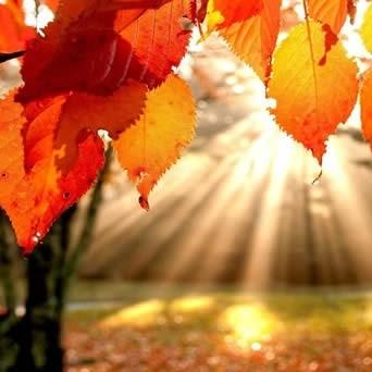 Wat te doen met afgevallen bladeren?