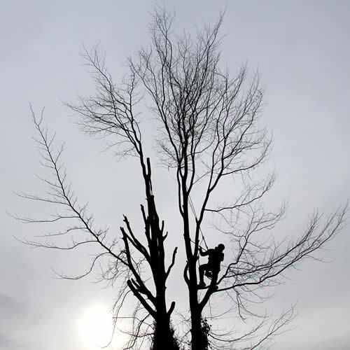 Bomen lezen: wat te doen met te hoge bomen