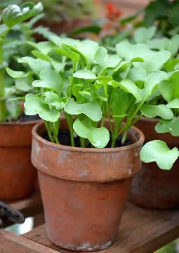 Vierkante meter moestuin in maart: de eerste groenten!