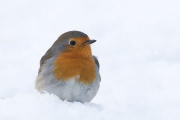 Vogels spotten en fotograferen in jouw tuin