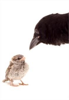 Interessante weetjes over de vogels in onze buurt: deel 2
