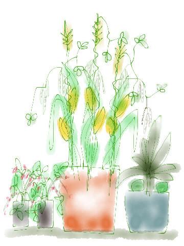 Combinaties in pot: Samen sterk en dubbel handig