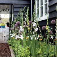 3 tips om een bloemenborder aan te leggen met bloembollen
