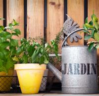 kruiden kweken op terras, Gemakkelijk kruiden kweken op je terras, zelf kruiden kweken, terraskruiden verzorgen