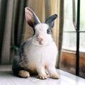 10 tips bij het kiezen en houden van konijnen