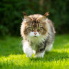 Katten weren uit de tuin: vreedzame methodes op een rijtje