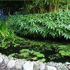 Bamboe planten nabij een folievijver: kies voor niet woekerende bamboe zoals Fargesia
