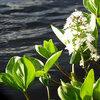 Soorten vijverplanten en hun verzorging