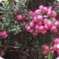 Najaarsbeplanting grassen en bessen