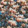 Vele soorten bloeiende planten kondigen de lente aan.