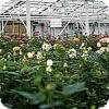 Planten veredelen is een duur werk van lange adem