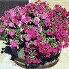 Compost gebruiken in bloembakken, potgrond, kamerplanten