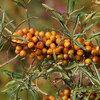 Klein fruit ook zacht fruit genoemd zorgt voor een sappig najaar