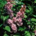 Pastelkleurige voorjaarsbloeiers