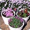 Romantische bloemtinten fleuren de tuin op.