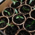 Zaaikalender groenten