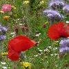 Bloemenweide aanleggen: praktisch, plaats, soorten bloemen, zaaien...
