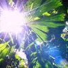 Tuinaanleg: zon of schaduw belangrijk bij de keuze van uw planten