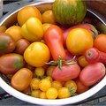Gezonde tomaten tegen kanker