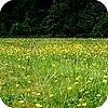 Graslandvegetatie is een gazon en bloemenweide tegelijkertijd