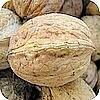 Okkernoten: geneeskundig gebruik en recepten met okkernoten in de keuken