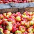 Appels tips en weetjes voor een langere en betere bewaring