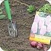Plant in de herfst uw voorjaarsbloeiende bolgewassen zoals narcis, krokus, narcis,...