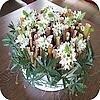 Schaal met holle stengels en bloembuisjes gevuld met ornithogalum of vogelmelk