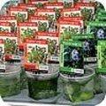 Drijfplanten zijn nuttig voor vijvers voor het biologische evenwicht en de waterkwaliteit