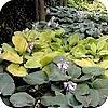 Mooie bladplanten voor in de tuin