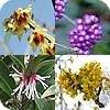 Heesters die kleur, sfeer en structuur geven aan de tuin in de late herfst en de winter