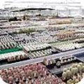 Tuinreis naar cactuskwekerijen
