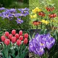 ABC van de voorjaarsbloembollen