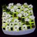 Goedkoop bloemstukken maken