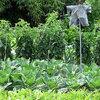 Groenten zaaien, planten of oogsten in augustus - groenten telen in de volle grond en in een serre