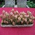 Feestelijke tafel met bloemstuk