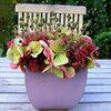 Bloemschikken herfst: bloemschikken met sedum, herfstanemoon en hortensia