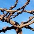 Laat je imponeren door het krachtige wintersilhouet van stoere bomen